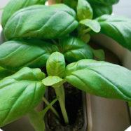 Voor jou getest: de indoor gardens Prêt à pousser